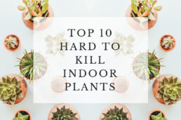 Top 10 hardy indoor plants