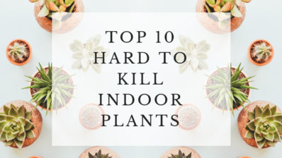 Top 10 hardy indoor plants